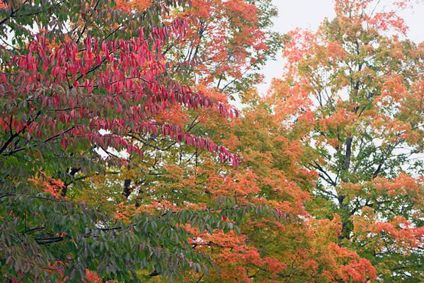 Rhode Island, Massachusetts, Autumn Foliage