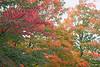 Rhode Island, Massachusetts, Autumn Foliage : Rhode Island, Moose Hill in Sharon MA, and Rte 27, Maynard MA