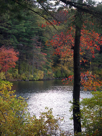 Fall Foliage Blue Hills