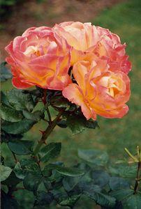 Nature 1990s